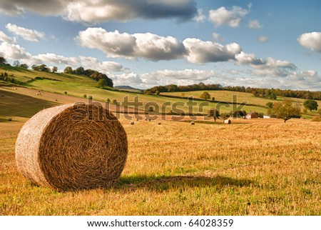 Perfect harvest landscape with straw bales amongst fields in UK