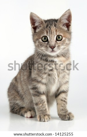 Perfect little kitten looking directly into the camera - stock photo