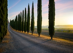Perfect Road/Avenue through cypress trees - ideal Tuscan landscape