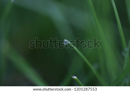 Perfect Single Droplet on a Blade of Grass, Spring Rains #1201287553