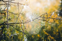 Perfect spider web hanging on the grass and glowing the morning light. Selective focus on cobweb. Magical atmosphere in early morning. Vibrant photo wallpaper. Template natural background.