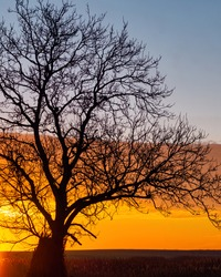 Perfect sunrise! Lonley tree shaping its branches in the sun light!