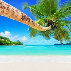 Perfect tropical coconut palm white sandy beach Baie Lazare, one of the most beautiful beaches in the world, Mahe island, Seychelles, gem of Indian Ocean shore