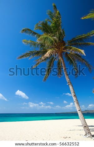 Perfect tropical white sand beach with palmtree