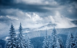 Perfect winter landscape with covered snow trees. Dramatic wintry scene. Carpathian, Ukraine, Europe. Happy New Year! Winter nature wallpapers. Christmas holiday concept. Discover the beauty of earth.