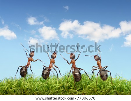 perfect work team concept, ants under summer blue sky