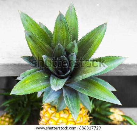 Perfect Yellow Pineapple
