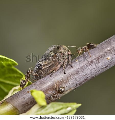 periodical cicada on leaf #659679031