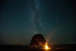 Perseid meteorshoer in the sky above old pine
