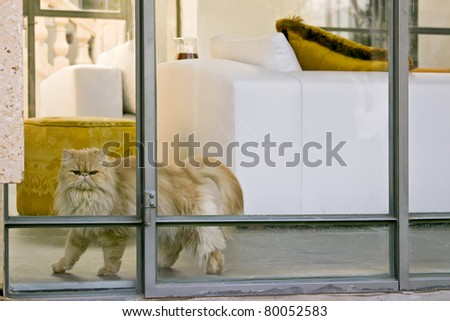 Persian cat in the interior of the house
