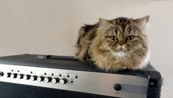 Persian cat on guitar amp and white background