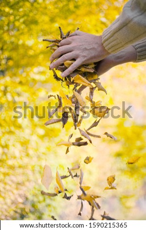 Person dropping autumn beech leaves on ground