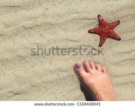 Person female standing (one visible bare foot) beside vivid red Sea Star starfish on South Australian beach, Spencer Gulf crustacean echinoderm asteroidera, invertebrate marine minimalistic copy space #1368468041