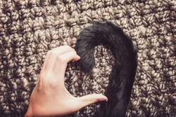 Person's hand and a cat's tail making a heart shape.  Instagram