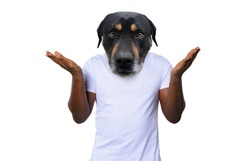 Person with head of a dog is consused about something. concept of consusion