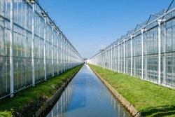 Perspective view of a modern industrial greenhouse for tomatoes in the Westland, the Netherlands. Westland is a region in of the Netherlands.