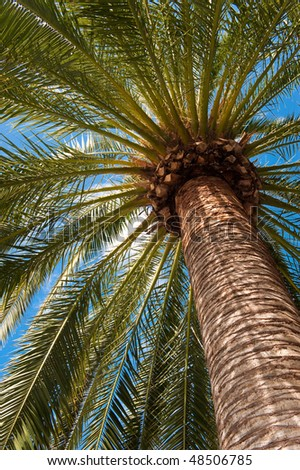 Perspective view of a tall palm tree against a blue sky