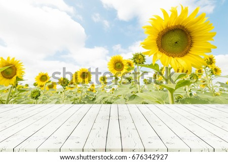 Perspective white wooden table on top over blur sunflowers background, Empty table for Your photo, Great for summer products monatges display or design layout.