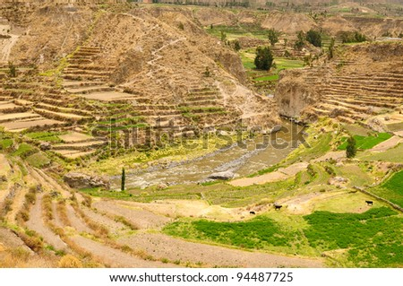 Peru, Colca canyon. the secend wolds deepest canyon at 3191m. The canyon is set among high volcanoes and ranges from  1000m to 3000m where life the Condor.  View of the Colca river ant field teracce