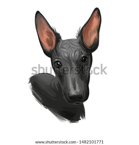 Peruvian Hairless dog portrait isolated. Digital for web, t-shirt print and puppy food cover design, clipart. Perro Sin Pelo de Peru, Inca Dog, Viringo, Peruvian Inca Orchid, Calato, Dielmatian Foto stock ©