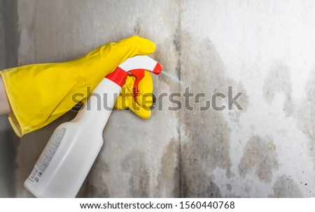 pest control, a person sprays a remedy for mold and other pests on the walls of the house #1560440768