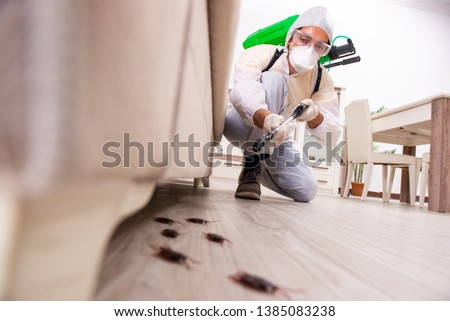 Pest control contractor working in the flat  Foto d'archivio ©