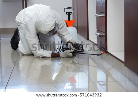 Pest control man spraying pesticide under the cabinet in kitchen #571043932