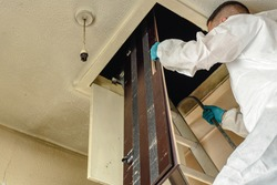 Pest controller,  builder, trades man climbing ladder in to loft hatch with loft crawl board.