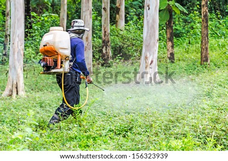 Pesticides Spraying. Farmer kills weed spraying pesticides in Eucalyptus garden