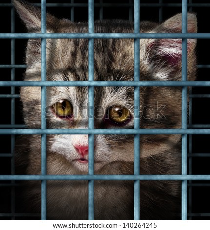 Pet adoption concept for orphaned and unwanted animals as cats or dogs caged in a shelter for pets represented by a sad cute kitten behind  metal prison bars. - stock photo