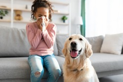 Pet Allergy Concept. Ill black girl sneezing and holding paper napkin, suffering from runny nose and nasal congestion, sitting on couch at home indoors in blurred background, selective focus on dog