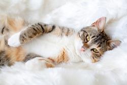 Pet animal; cute cat