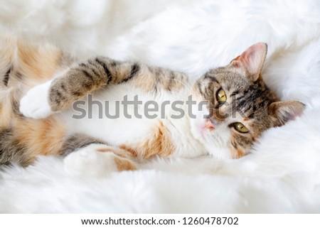 Pet animal; cute cat #1260478702