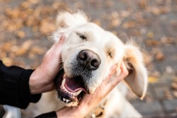 Pet care concept. Funny smiling golden retriever dog in the park