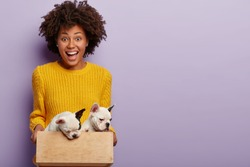 Pet care concept. Joyous dark skinned female owner holds her puppies in small wooden box, ready to give them in right hands, rejoices dog family growing, wears yellow sweater, isolated on purple wall
