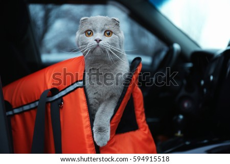 Pet carrier with cute cat in car