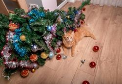 Pet cat destroys Christmas tree. A cat looks innocent at broken christmas decoration balls.