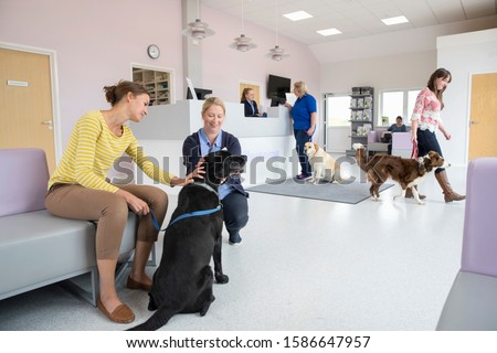 Pet dog owner with nurse in vet surgery waiting room reception