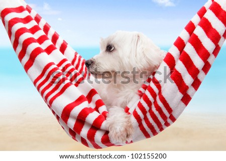 Pet dog relaxing in a soft red and white hammock by the beach