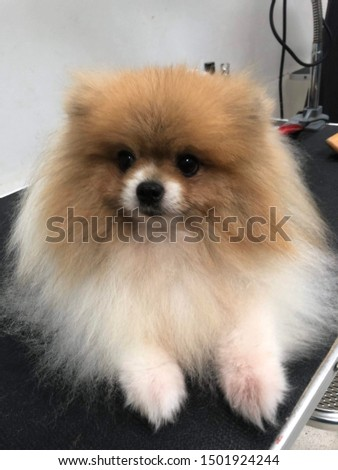 pet grooming pet care cute dog #1501924244