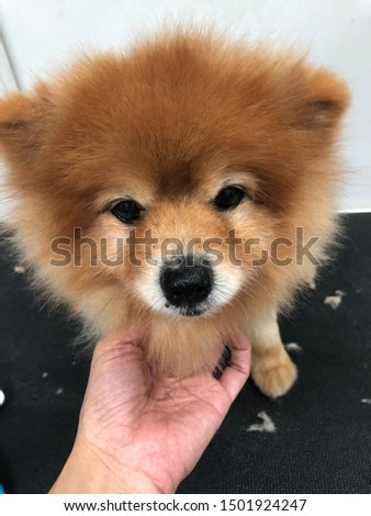 pet grooming pet care cute dog #1501924247