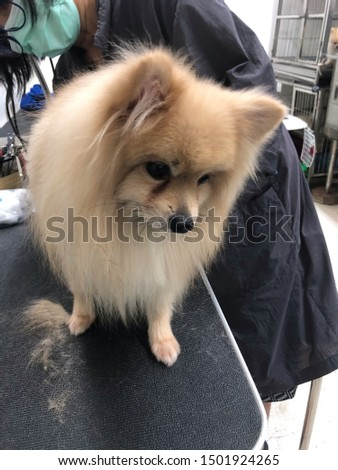 pet grooming pet care cute dog #1501924265