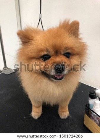 pet grooming pet care cute dog #1501924286