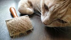 pet hair brush with pet fur clump after grooming cat