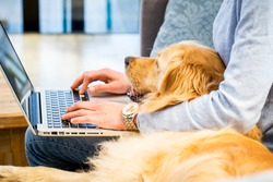 Pet laying in the lap of the owner who is typing on laptop