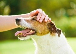 Pet owner uses physical contact to calm down her dog and stop anxiety