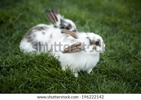 pet rabbit baby