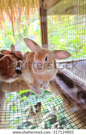 Pet rabbit in a cage in Thailand