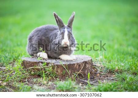 Pet rabbit on a tree stump