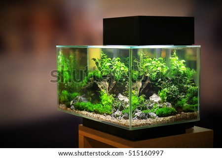 Pet shop aquarium